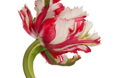 WORLD-CLASS ARTIST MARKS 4TH SHOWING AT ARCHITECTURAL DIGEST HOME DESIGN SHOW WITH INNOVATIVE TULIP SERIES ON METAL