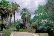PRAISE FOR DAVID LEASER'S WORK FROM THE CALIFORNIA HORTICULTURAL SOCIETY