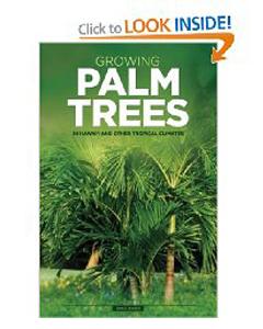 palm_1