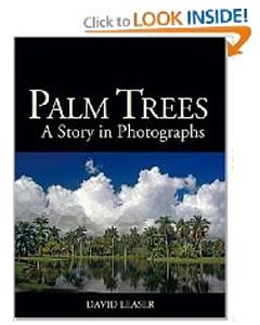 palm_3