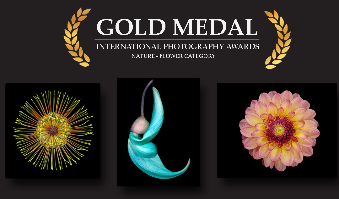 LEADING BOTANICAL PHOTOGRAPHER WINS GOLD AND SILVER MEDALS FOR INNOVATIVE NATURE SERIES AT INTERNATIONAL PHOTOGRAPHY AWARDS
